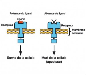 ligand