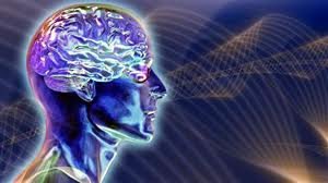 cerveau-41